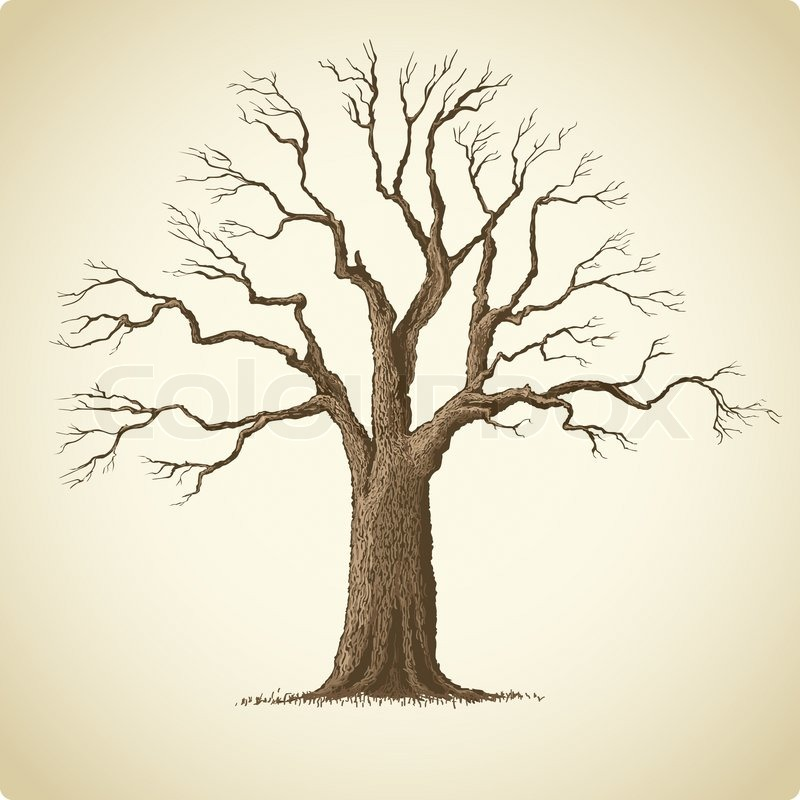 800x800 Vector Illustration Of Big Old Tree With Many Branches Stock
