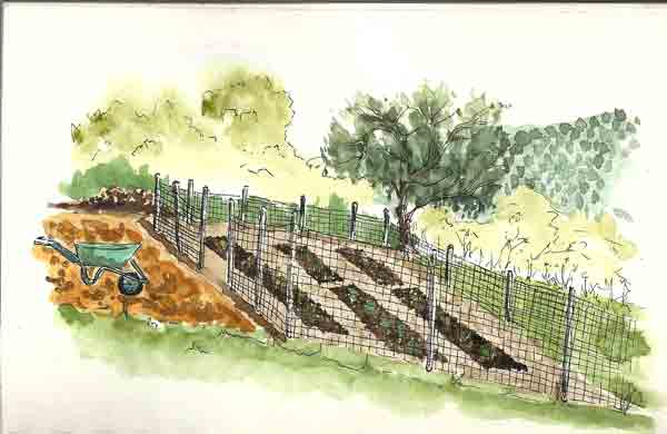 Vegetable Garden Drawing at GetDrawings.com | Free for personal use ...
