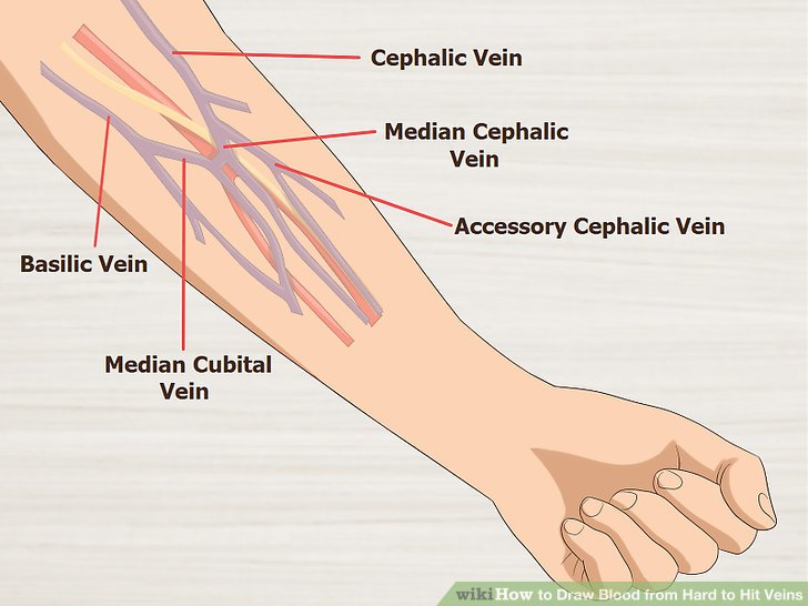 Veins Drawing at GetDrawings com | Free for personal use Veins