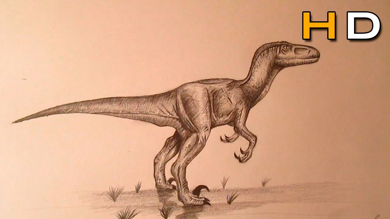 1280x720 How To Draw A Velociraptor Step By Step With Pencil