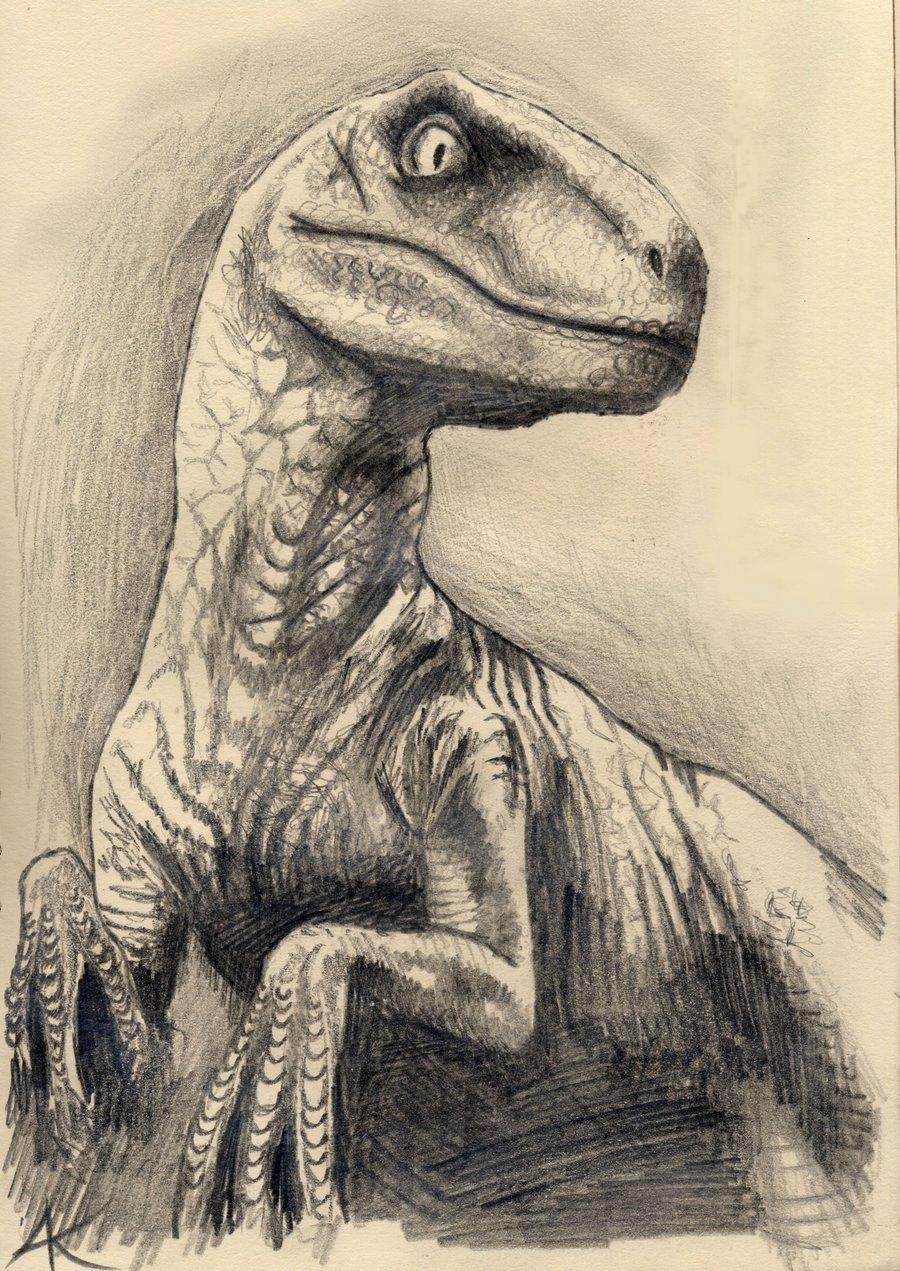 900x1271 Velociraptor Drawing