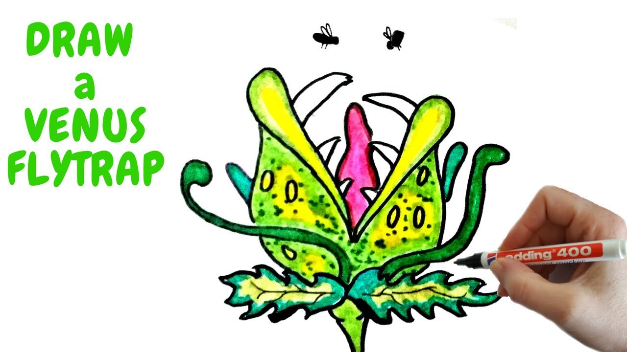 1280x720 How To Draw A Venus Fly Trap