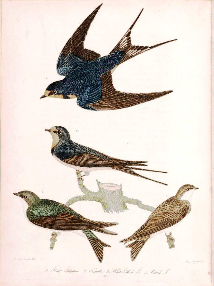 736x980 109 Best Bird Paint Images On Bird Art, Drawings