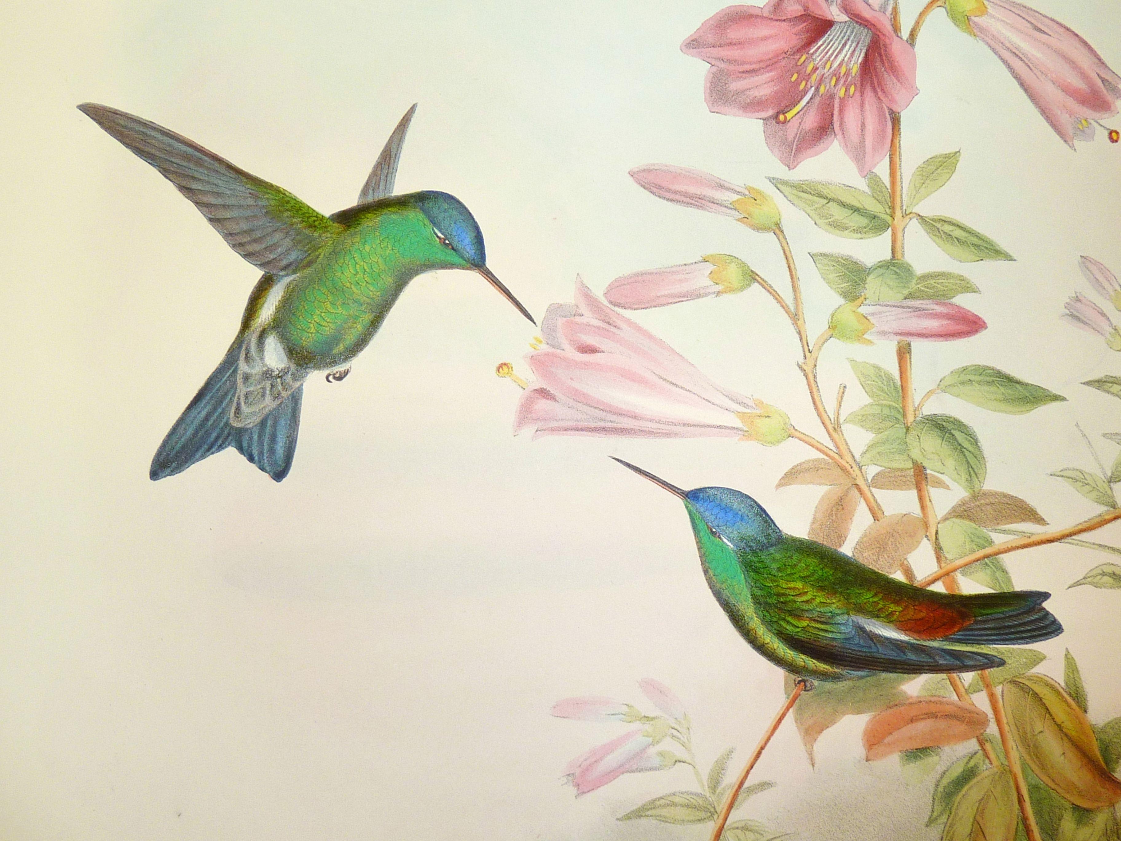 3648x2736 John Gould's Hummingbirds A Victorian Obsession Bird