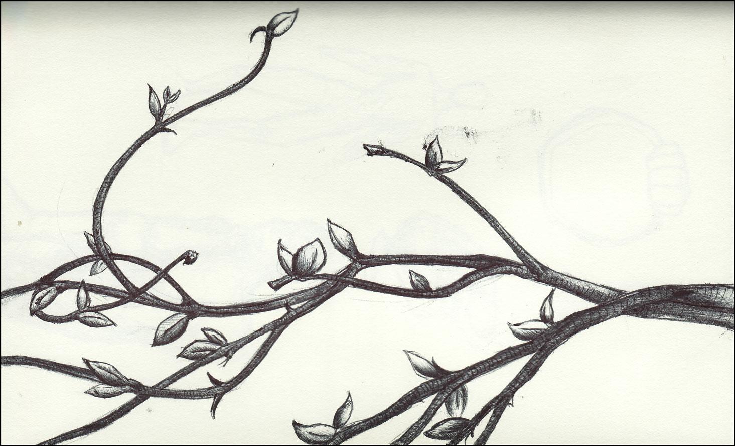 1465x888 Vine Drawing Vines.jpg A Tattoos Vine Drawing