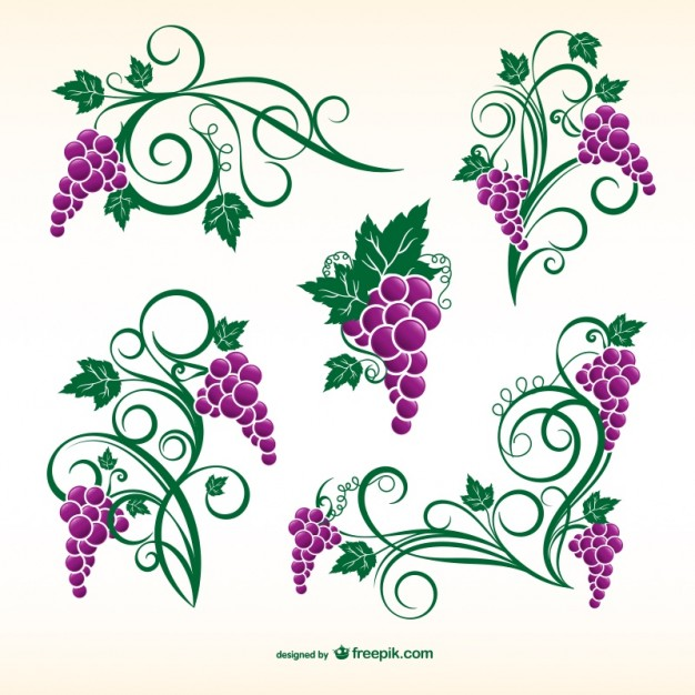 626x626 Vine Vectors, Photos And Psd Files Free Download