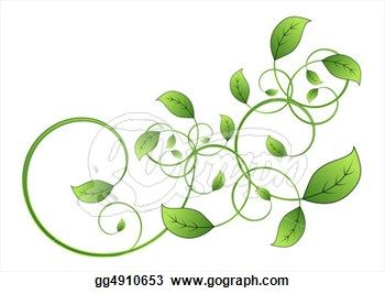 350x267 Drawings Of Vines And Leaves Drawing Flora Vine Leaf Isolated