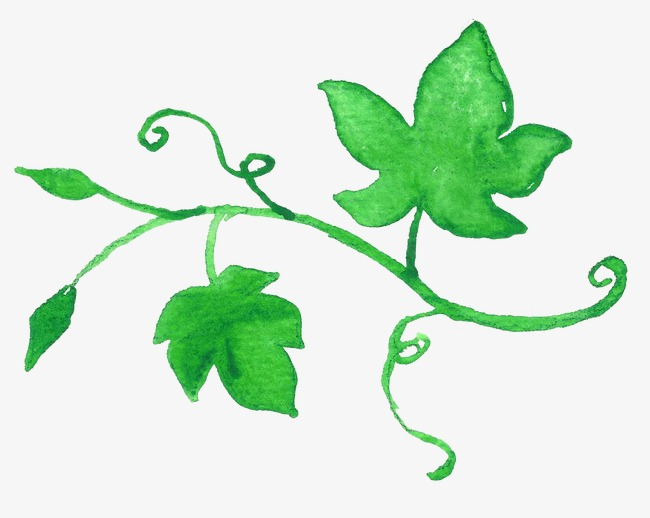 650x518 Green Leaves, Drawing Plant, Greenery, Drawing Vines Png Image