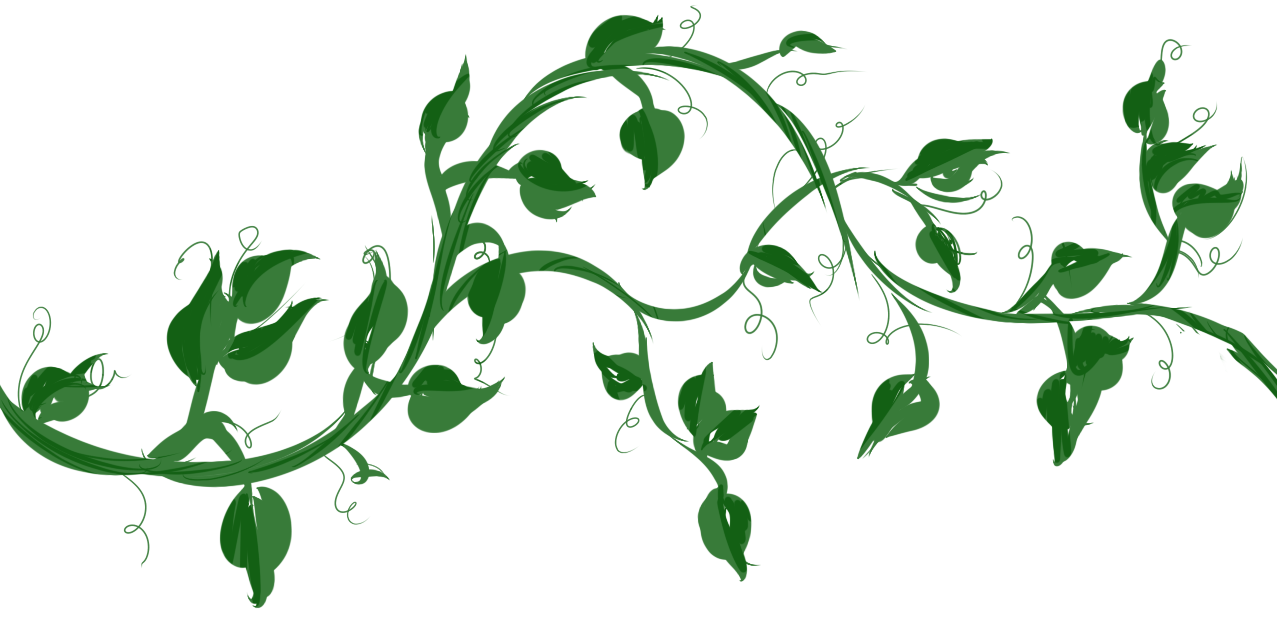 1277x630 Vine With Maple Like Leaves Drawing