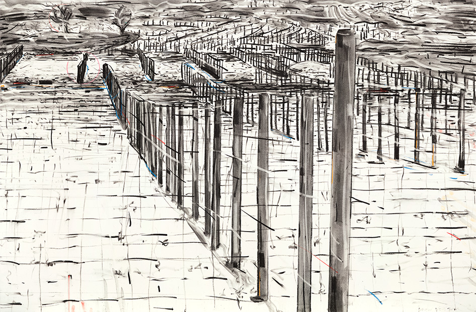 945x621 Deon Venter Drawing Vineyard