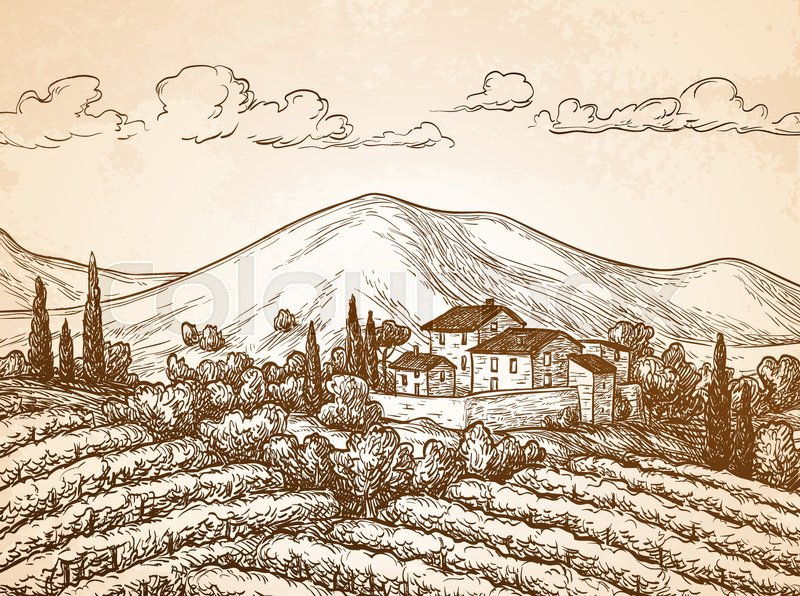 800x596 Hand Drawn Vineyard Landscape On Old Paper Background. Vintage