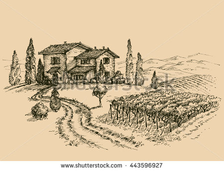 450x343 Vineyard Drawing. Traditional Farm Sketch