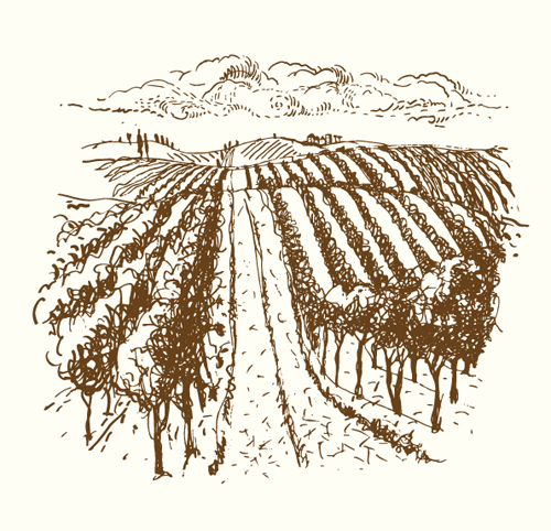 500x482 Vineyard Vector For Free Download