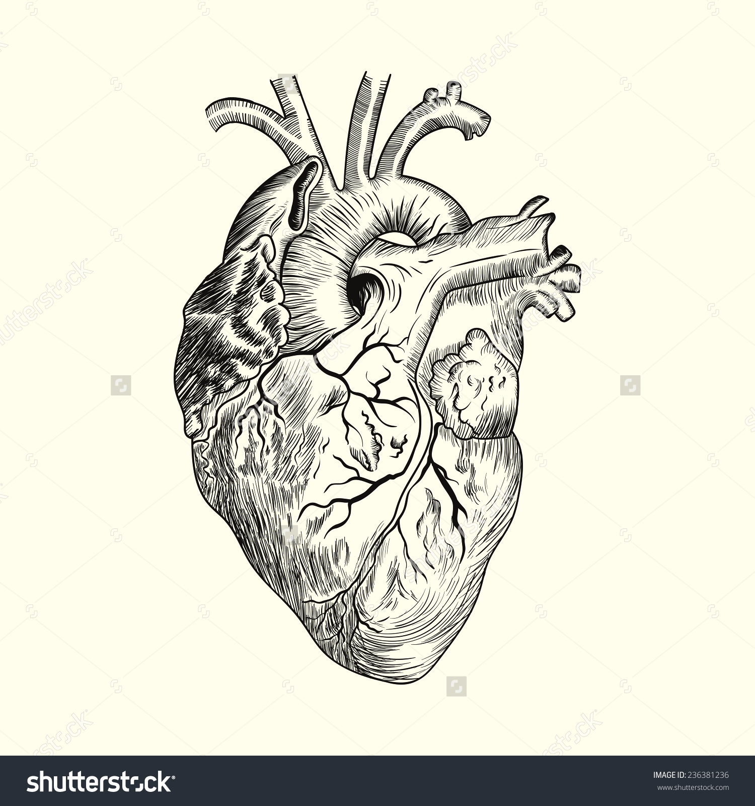 Vintage Anatomical Heart Drawing at GetDrawings.com | Free for ...