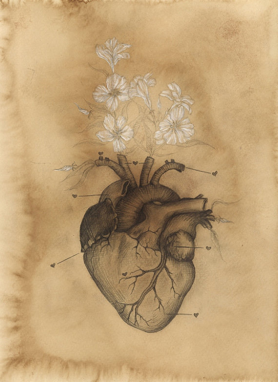 570x782 Limited Edition Philosophy Of Heart Vintage Anatomy Oleander Heart
