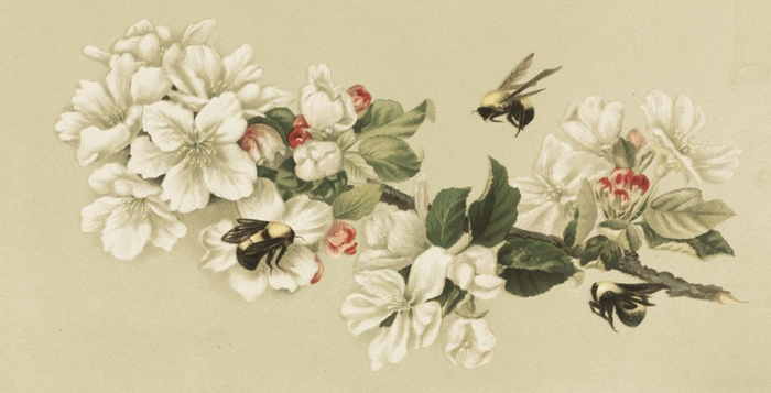 700x357 Free Vintage Bee Images