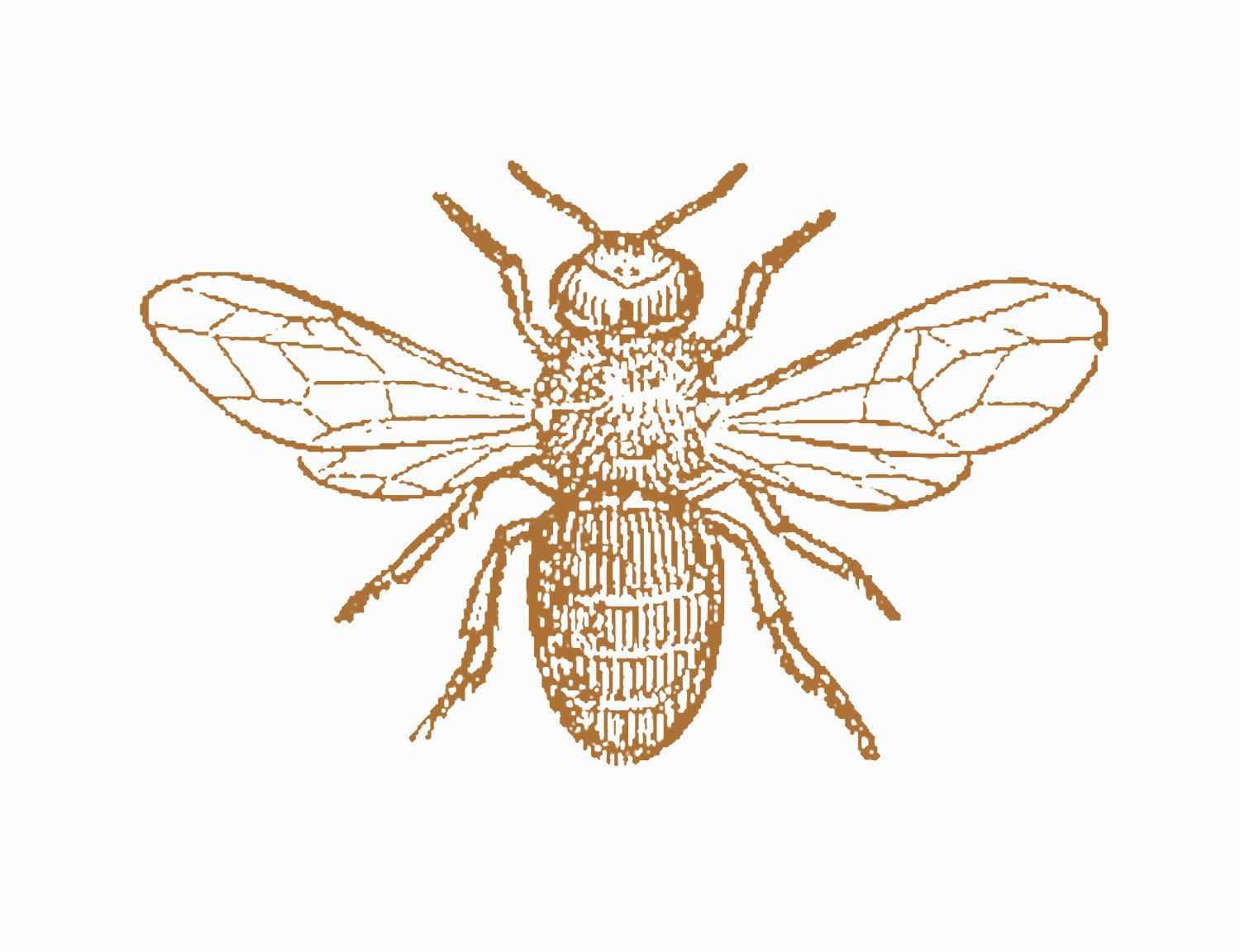 1500x1152 Honey Bee Most Honey Bees Are Reddish Brown And Black,