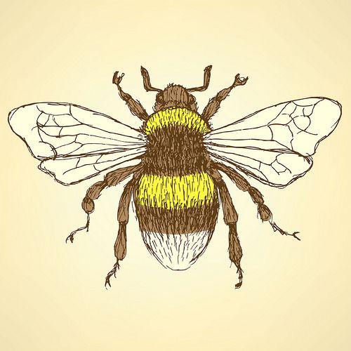 500x500 Vintage Bee Drawing Images Tattoos Vintage Bee