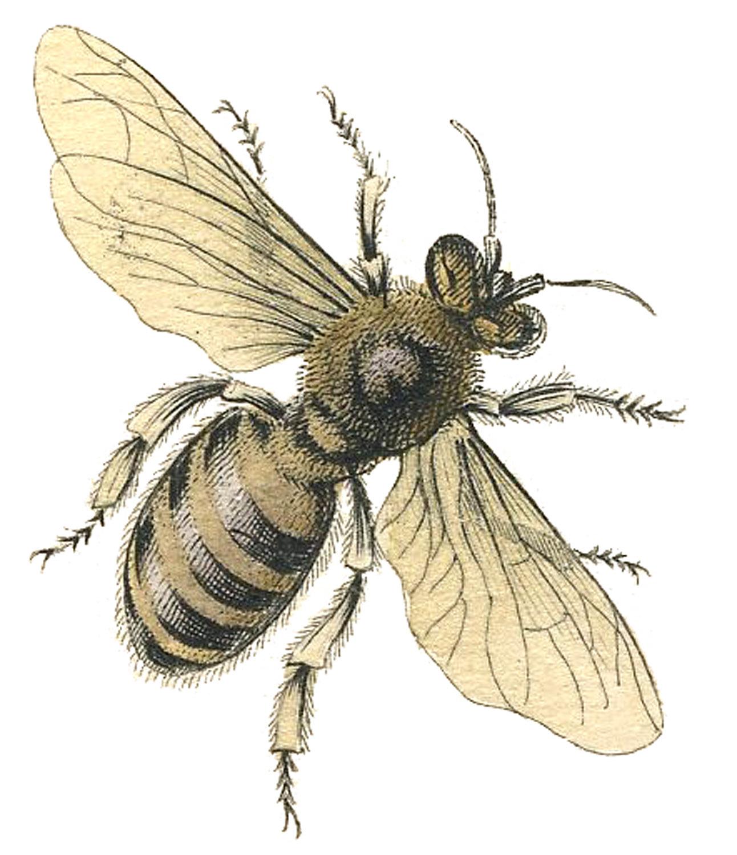 Antique Bees Diagram - Easy-to-read Wiring Diagrams •