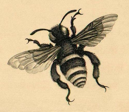 500x435 Vintage Bee Drawing =bees And Beekeeping= Vintage
