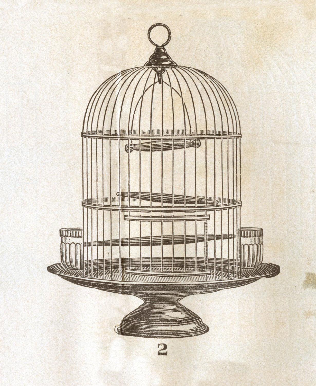 1230x1500 Antique Bird Cages Ideas Interior Exterior Homie