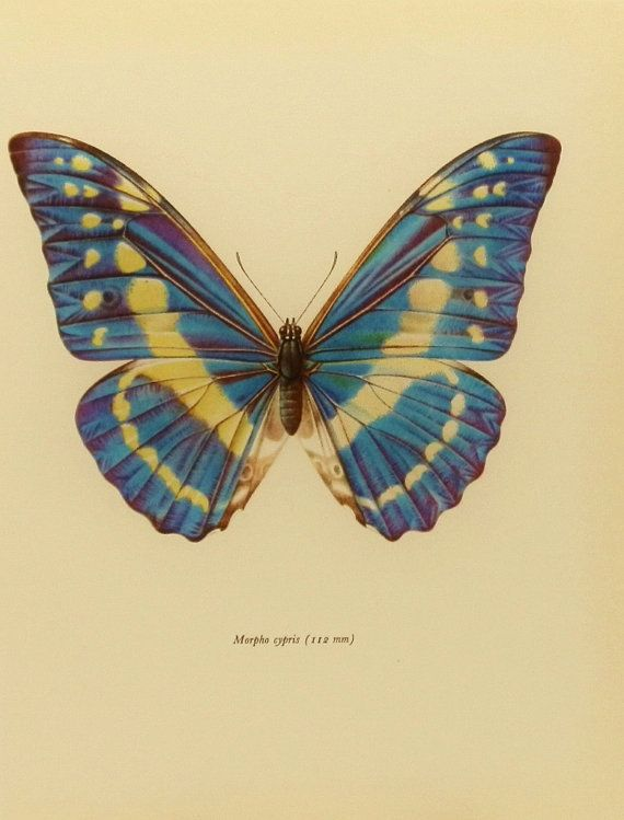 Vintage Butterfly Drawing at GetDrawings.com | Free for personal use ...