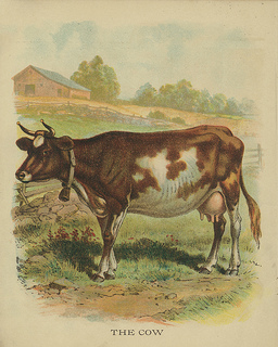 256x320 All Sizes Vintage Cow Drawing