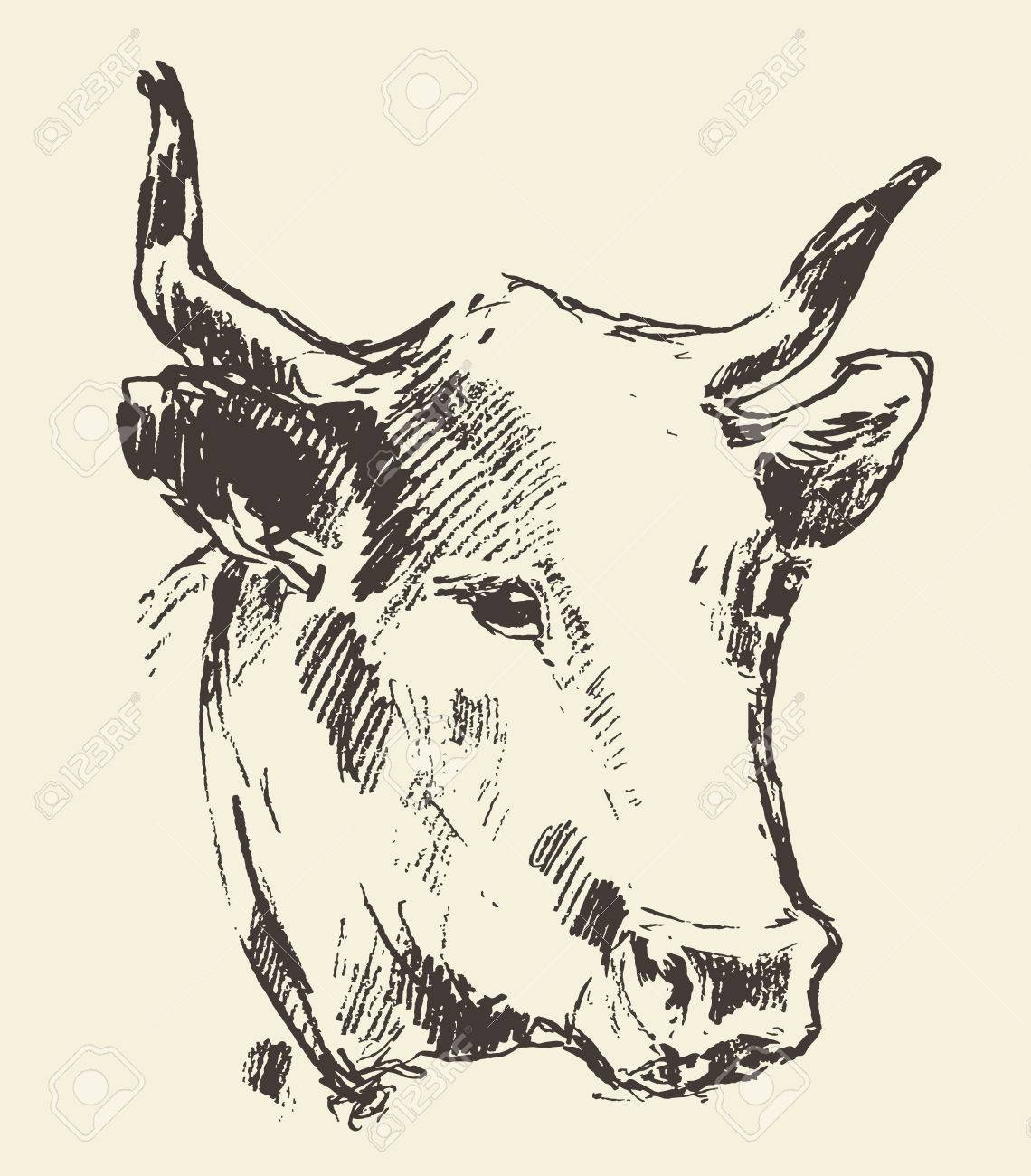 1140x1300 Cow Head With Bell Dutch Cattle Breed Vintage Illustration