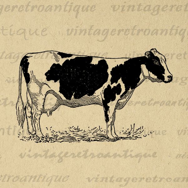 600x600 Printable Holstein Cow Digital Image Farm Animal Printable Cow