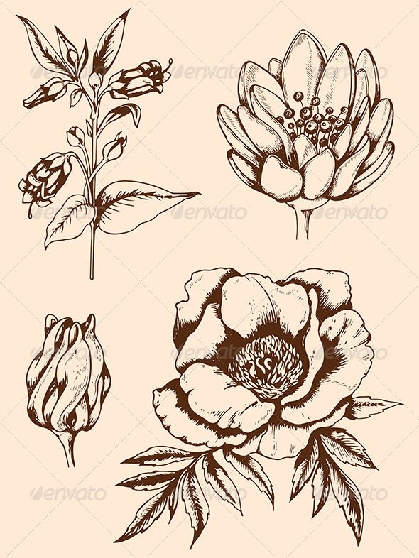 590x786 Vintage Hand Drawn Flowers Hand Drawn Flowers, Draw Flowers