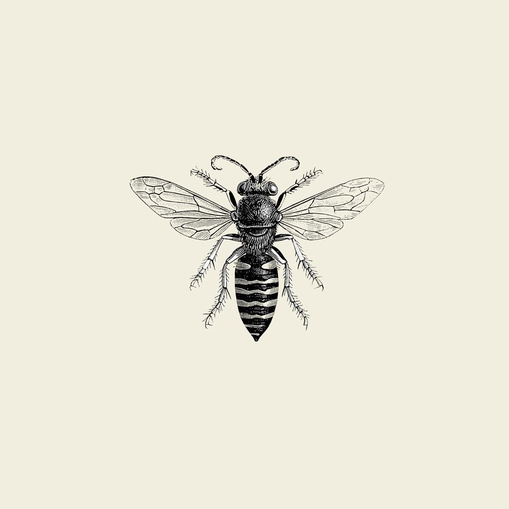 Vintage Honey Bee Drawing At Getdrawings