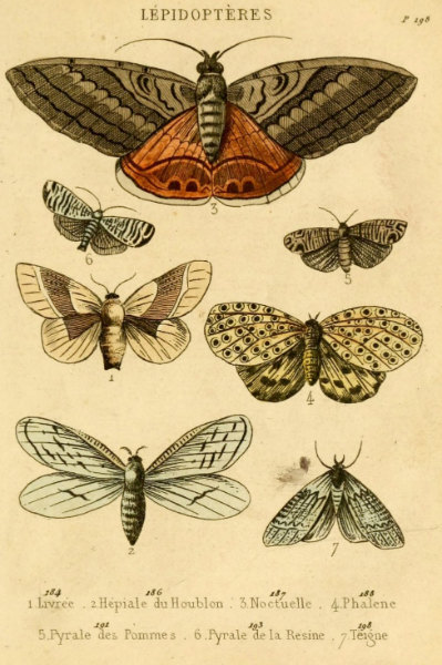 399x600 Antique Natural History Print The Study Of Moths Woodland Forest