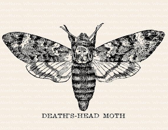570x440 Death's Head Moth Illustration Vintage Insect Clip Art