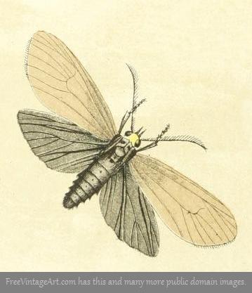 359x417 Tan Amp Brown Moth Drawing