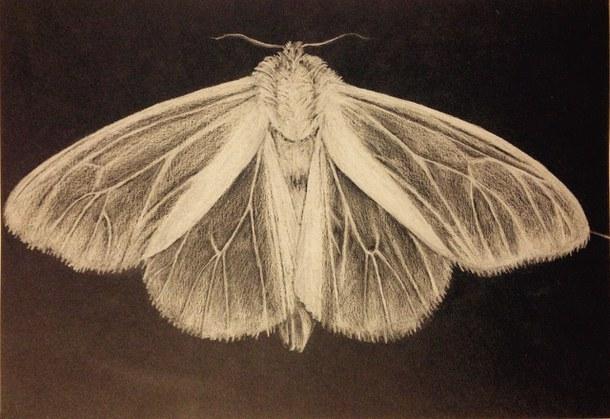 610x419 Art, Black, Blackandwhite, Boho, Butterfly, Draw, Drawing, Fly