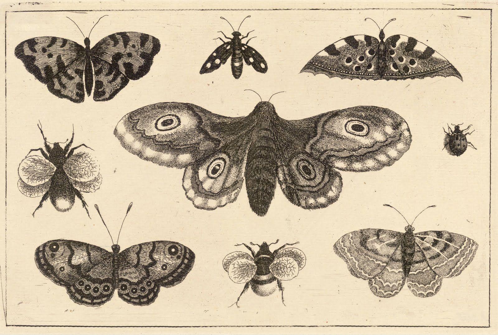 1600x1076 Ernst Haeckel Moth