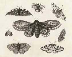 252x200 Scientific Insect Drawings