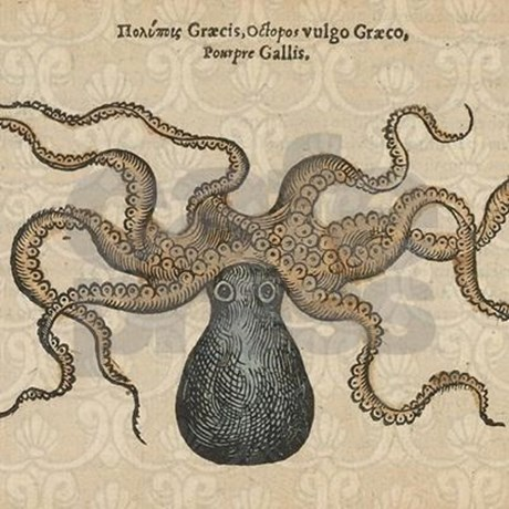 460x460 A Vintage Octopus Image, From A Wildlife Anatomy Book Published