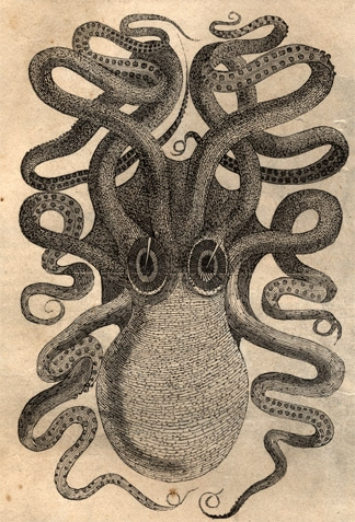 324x477 Octopus Engraving From Old Harper's Magazine Octopuses