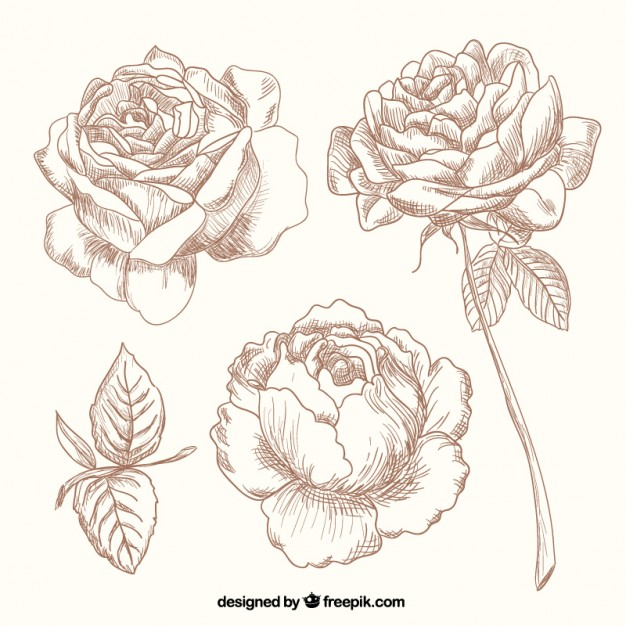 626x626 Hand Drawn Roses Vector Free Download