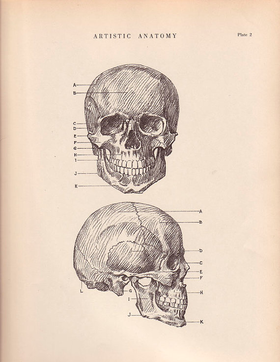 Vintage Skull Drawing at GetDrawings.com | Free for personal use ...