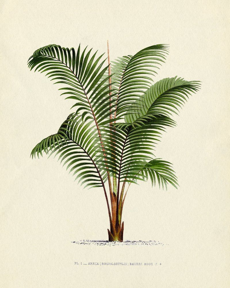 800x1000 Antique French Palm Tree Plate