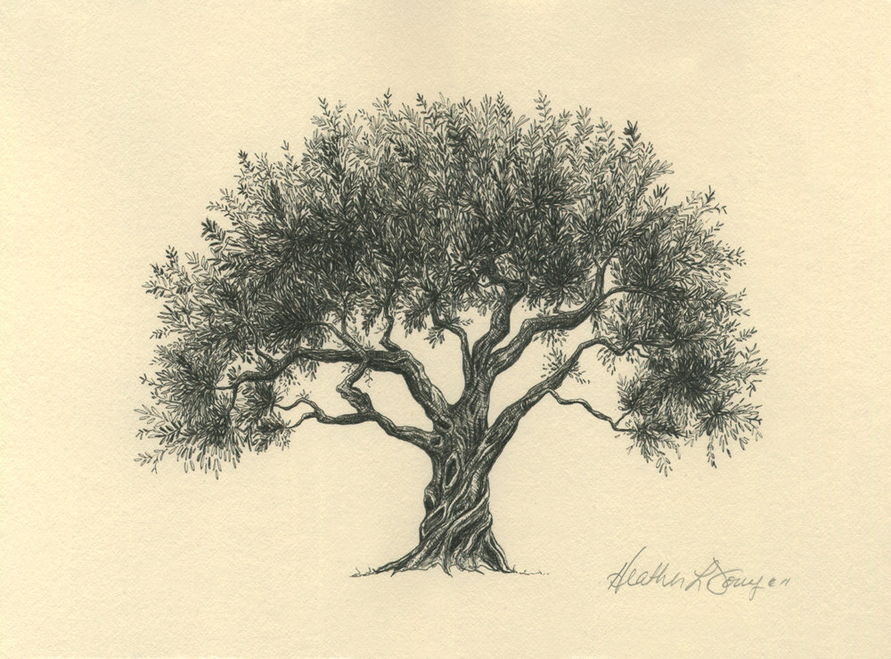 1000x740 Olive Tree Drawing Pen And Ink Fine Art Print On By Theinklab