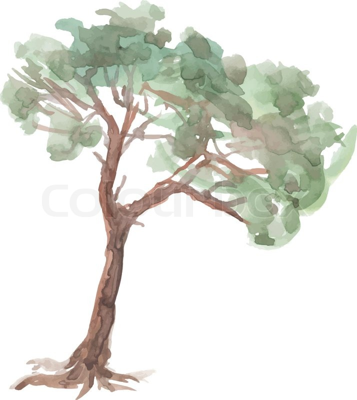 714x800 Pine Tree On A White Background. Watercolor. Sketch. Vector Trees