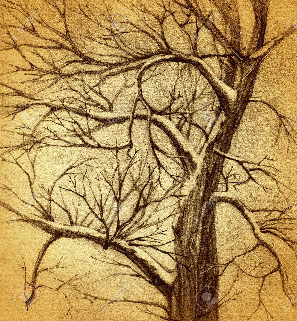 1202x1300 Vintage Tree Drawing Stock Photo, Picture And Royalty Free Image
