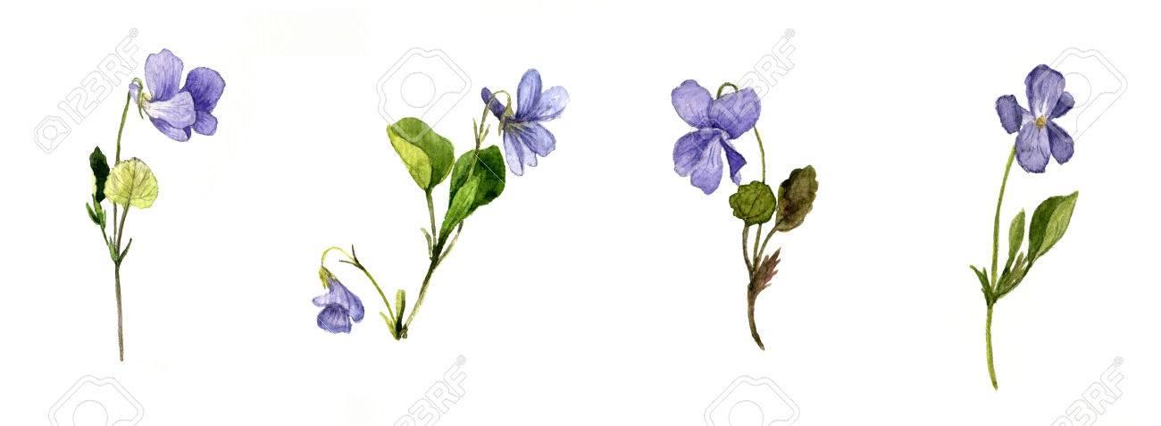 Violet Flower Drawing at GetDrawings | Free download