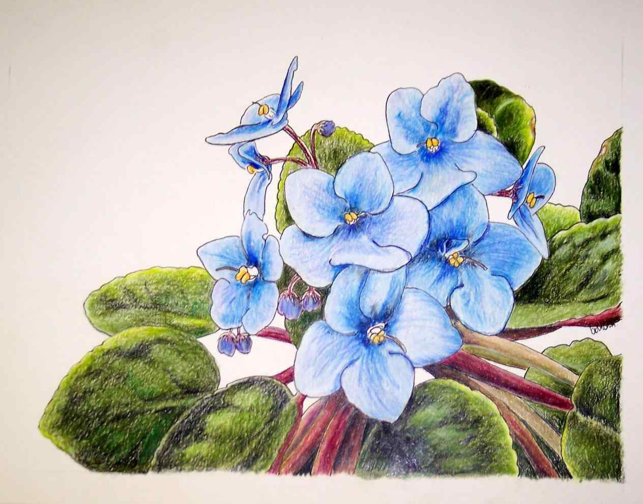 1264x990 Blog Saatchi Art Violets Drawing By Natali Khitrova Saatchi