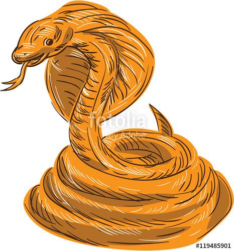 466x500 Cobra Viper Snake Coiled Drawing Stock Image And Royalty Free