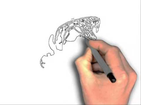 480x360 How To Draw A Viper Snake Step By Step