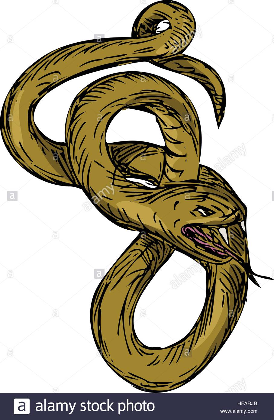 907x1390 Drawing Sketch Style Illustration Of A Viper Snake Coiling Up